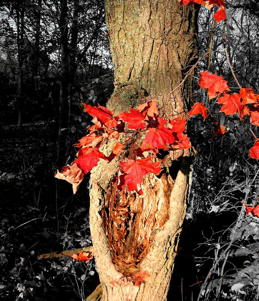 Red Leaves by nikspix