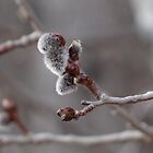 Signs of Spring by vigor