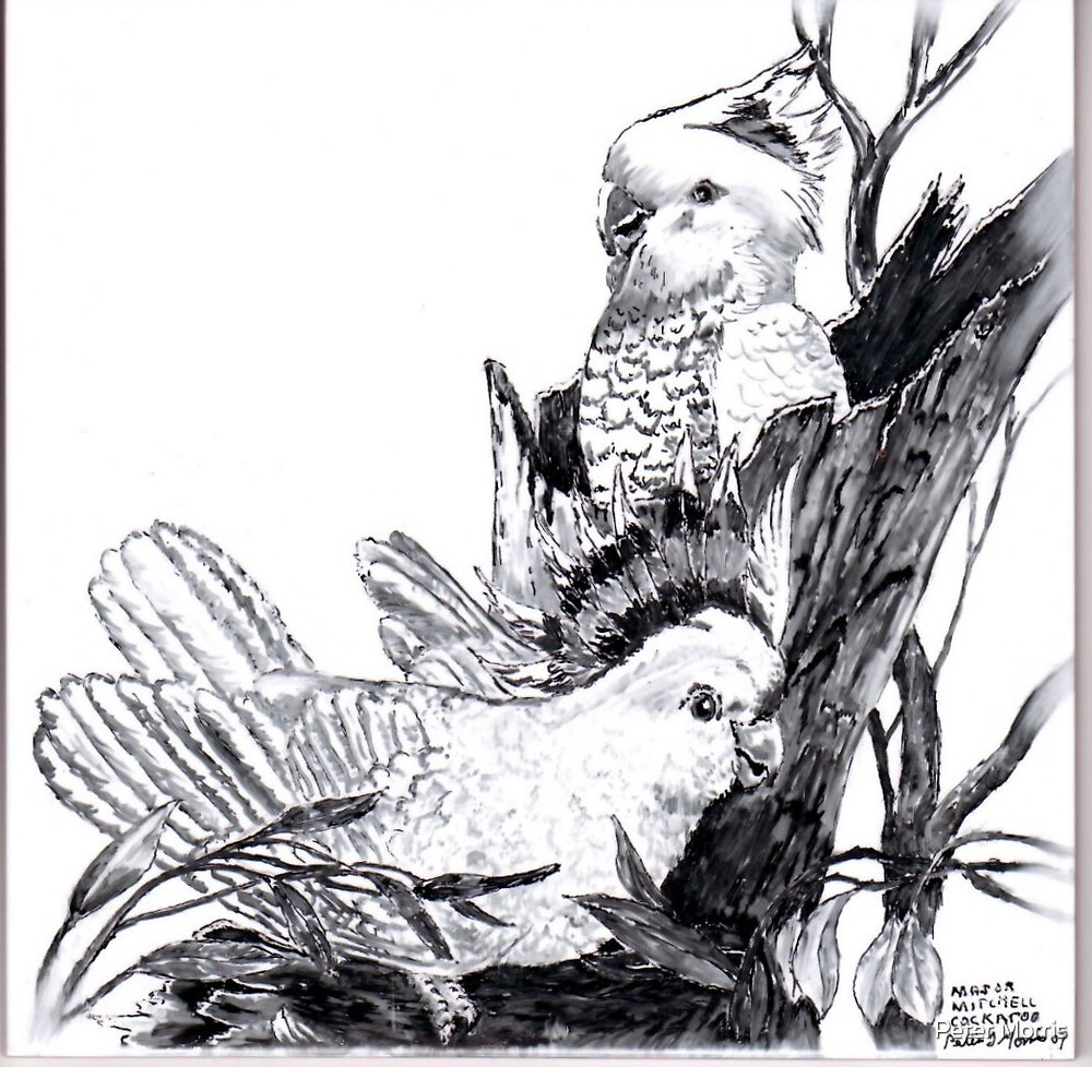 """Major Mitchell Cockatoo"" by Peter Morris"