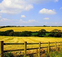 hay bails by Stuart Elliott