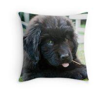 Zoe the Terre-Neuve Throw Pillow