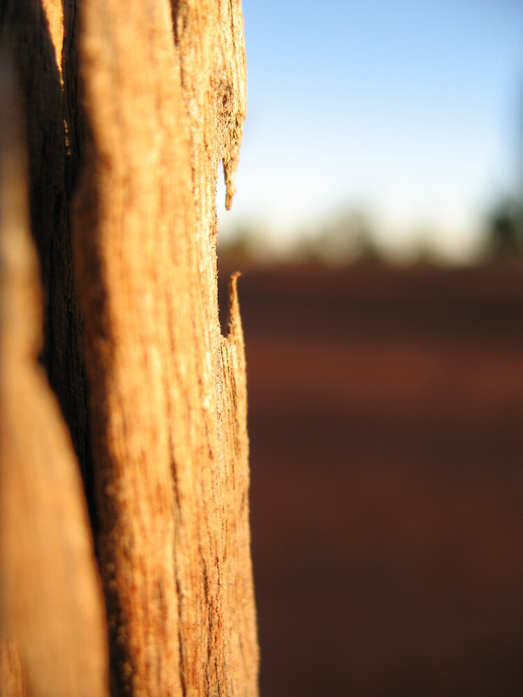 Fenceline. 1 hour east of Bourke. by Ross James