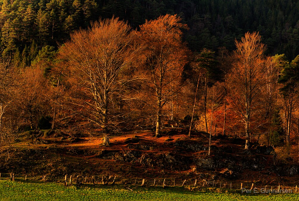 Autumn II  by Per E. Gunnarsen
