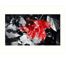 Red Accent Art Print