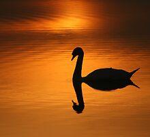 Evening Solitude by geoff curtis