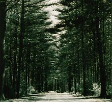 A road by Ronin
