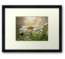 Daisies in the Mist Framed Print