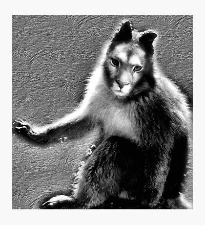 what animal am I? Photographic Print
