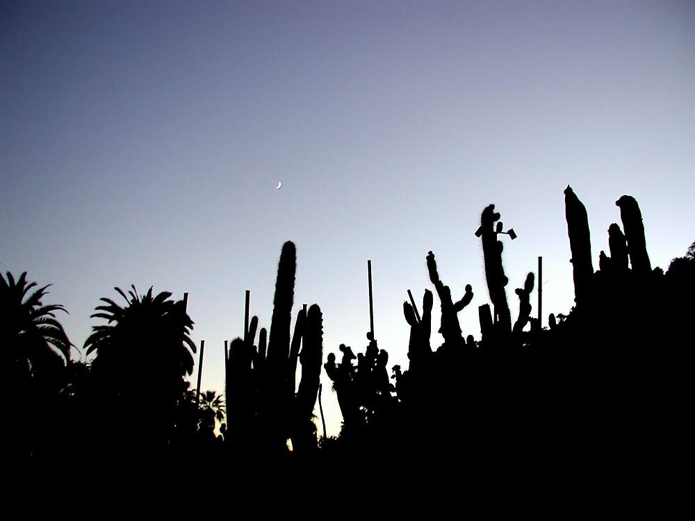 Barcelona Cacti by LizzyM