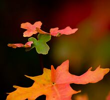 autumm leaves by P Michaud