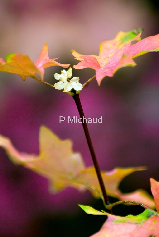 autumm blossom by P Michaud