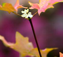 autumm blossom by P Michaud