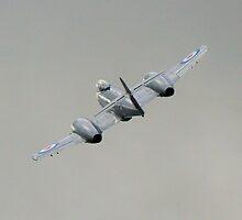 RAAF Gloster Meteor Mk VIII by naemick