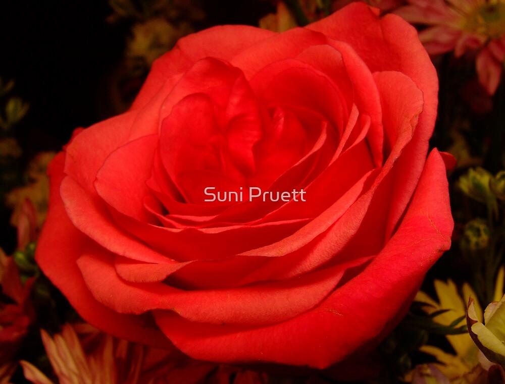 Velvet by Suni Pruett