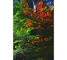 Flaming Fall Foliage Photographic Print
