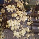 lantern leaves  by HarbourCityCards