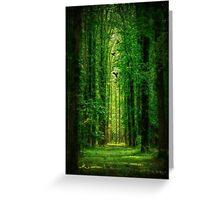 Towering Trees Greeting Card