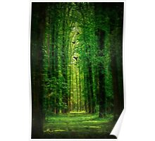 Towering Trees Poster
