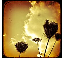 Aged Flowers Photographic Print