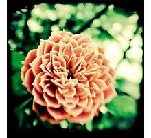 Acid Olde Tyme Rose Photographic Print