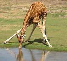 Giraffe by katt471