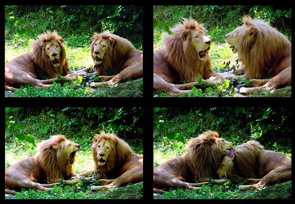 lion's conversation by CheyenneLeslie Hurst