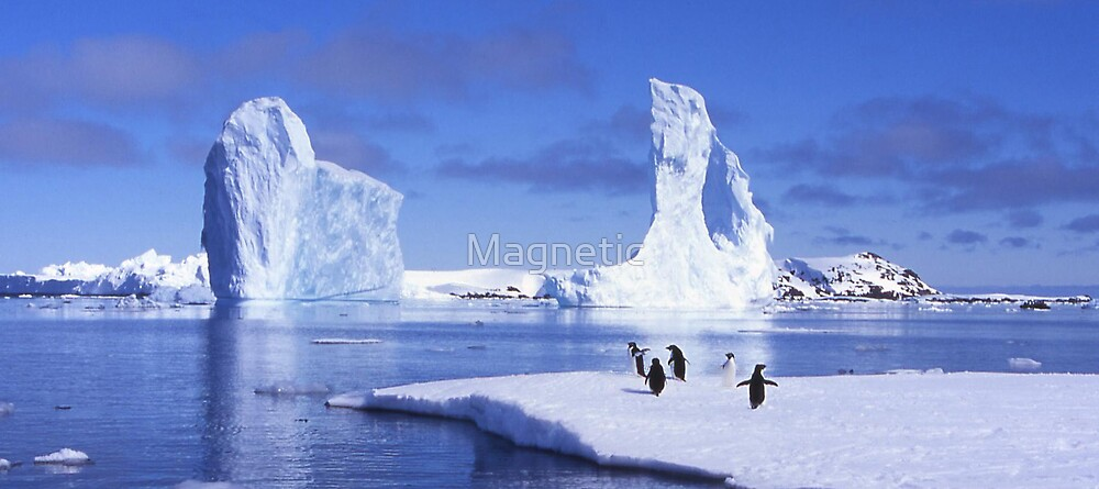 Penguins on Ice by Magnetic
