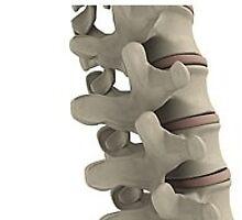 Spinal stretcher by ezstretchnflex1