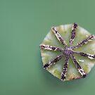 Poppy wheel by AquaMarina