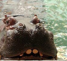 Hippo by LizzyM
