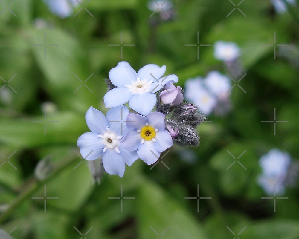 Petals of Wild Blue by georgiegirl