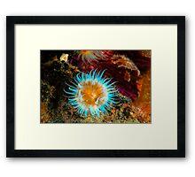 Vibrant Anemone Framed Print