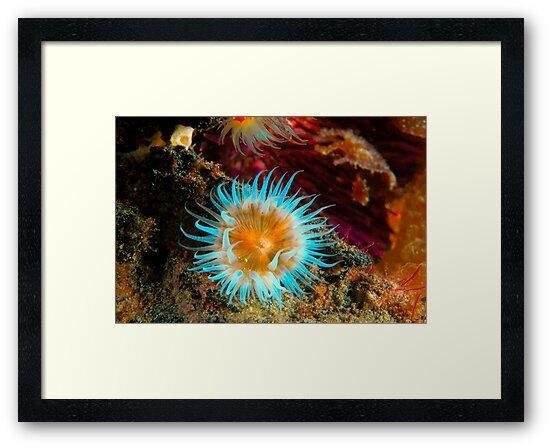 Vibrant Anemone by MattTworkowski