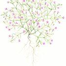 Baby's Breath - Gypsophila muralis by Sue Abonyi