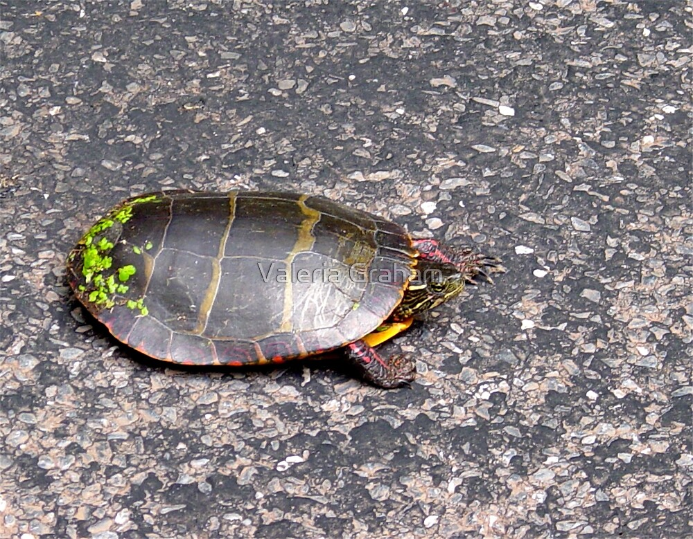 Turtoise by Valeria Lee