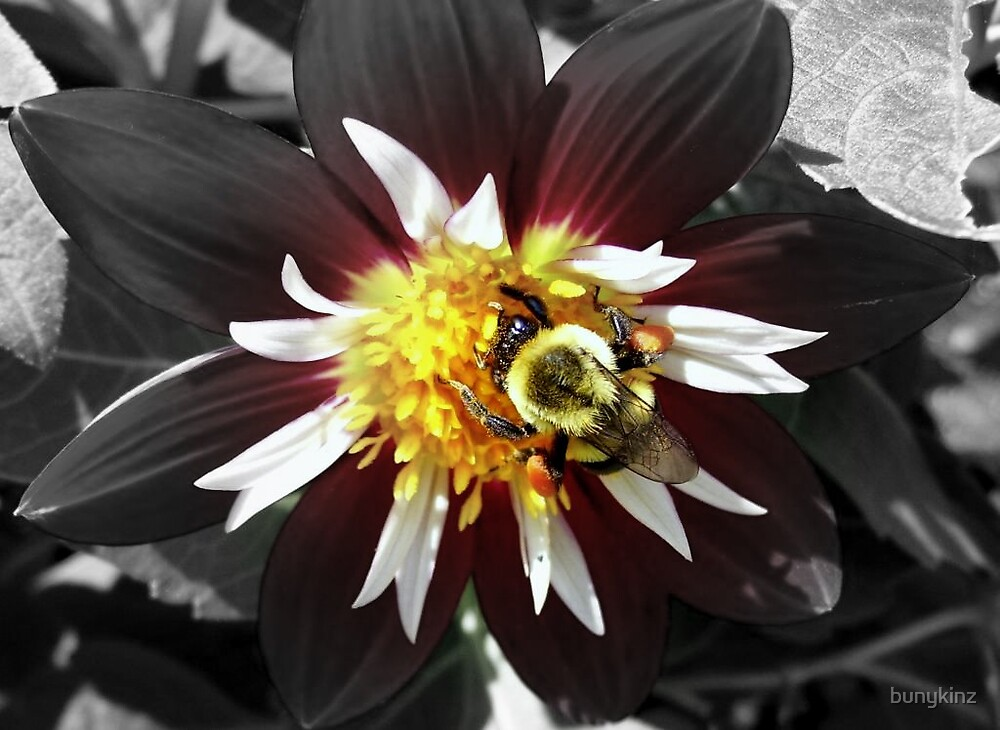 Bee on a Dahlia by bunykinz