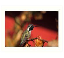 Perched Hummingbird Art Print