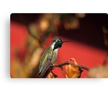 Perched Hummingbird Canvas Print