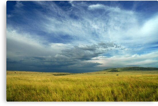 Masai Mara storm by Sharon Bishop