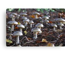 Toadstool army Canvas Print