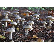 Toadstool army Photographic Print