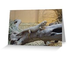 Here lizard, lizard, lizard Greeting Card