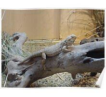 Here lizard, lizard, lizard Poster
