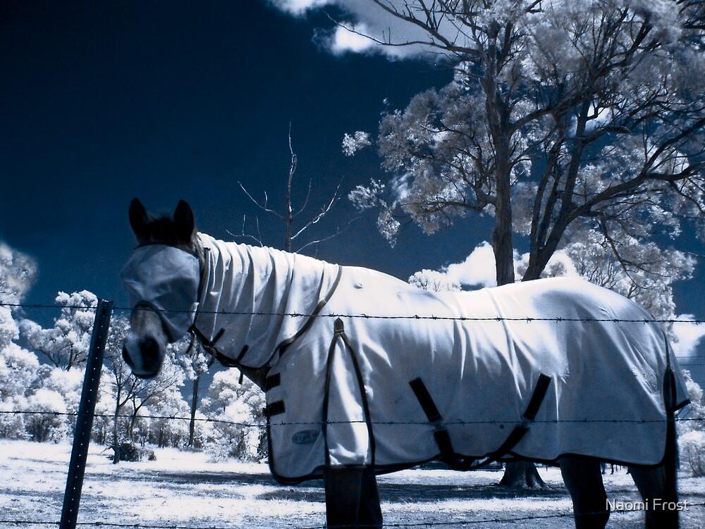 Snow Pony by Naomi Frost
