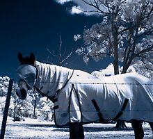 Snow Pony by Naomi Frost