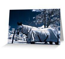 Snow Pony Greeting Card