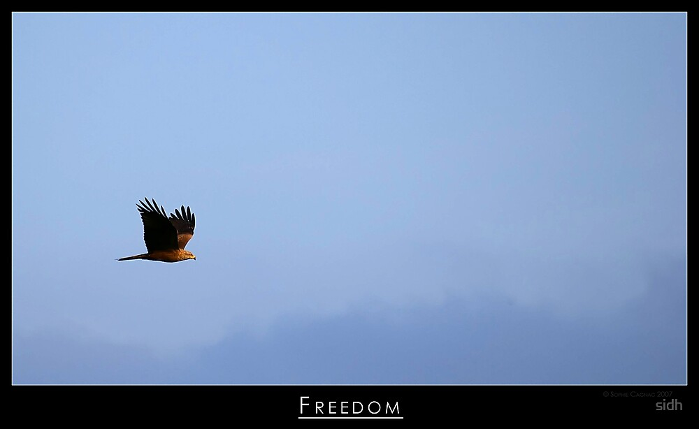 Freedom by Sophie Cagnac