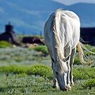 High Country Horses by John  De Bord Photography