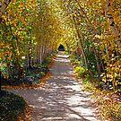 Birch Allee Vista by Jeff  Burns