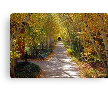 Birch Allee Vista Canvas Print